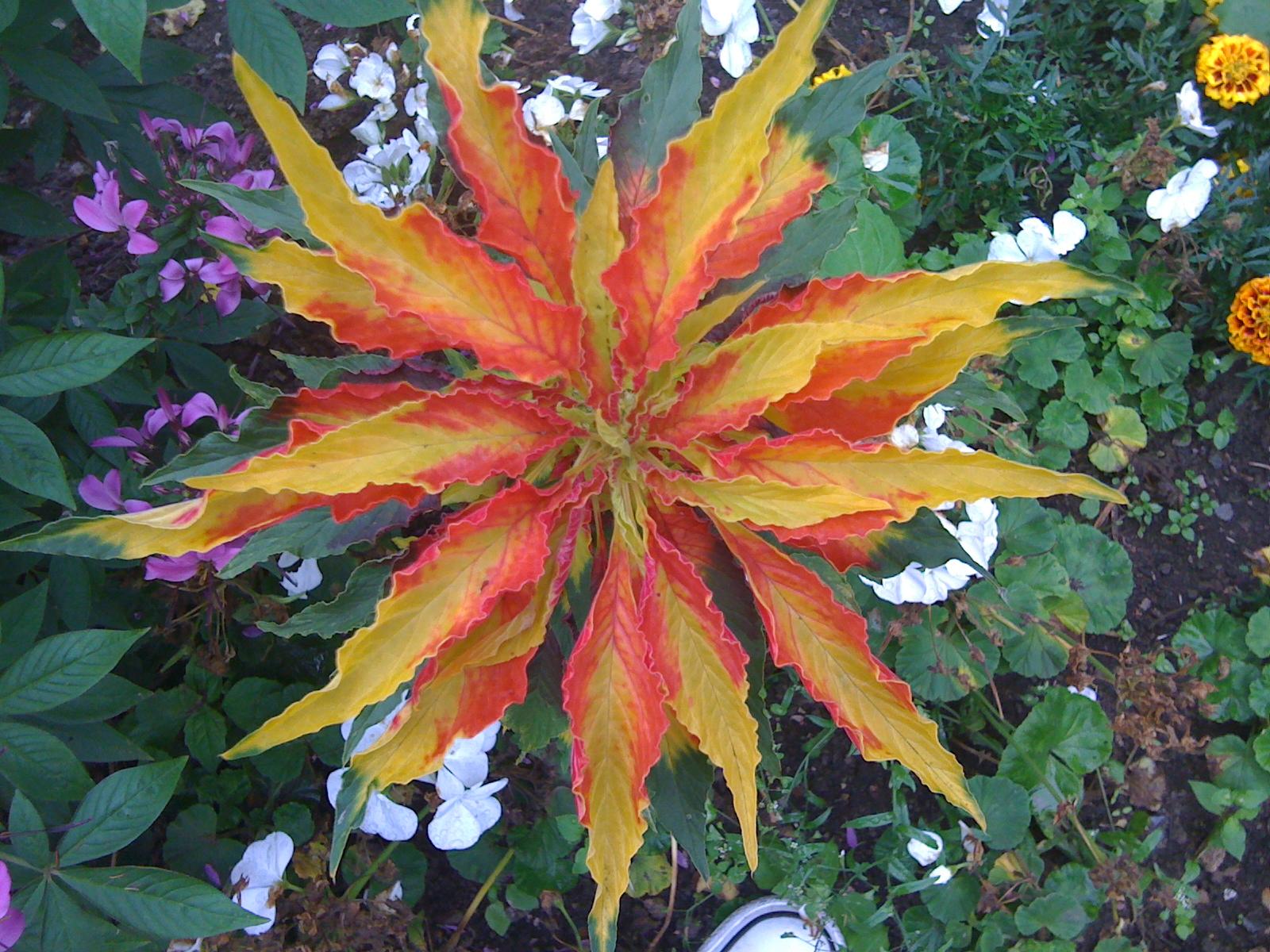 creative intelligence starfish flower