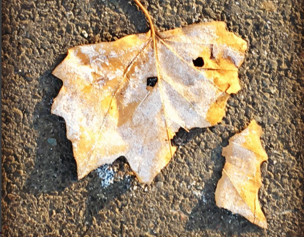 Haiku of the Week Features: Frozen Leaf