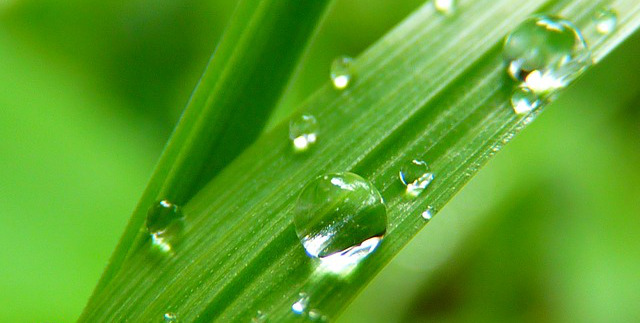 Haiku of the Week Features: Water Droplets