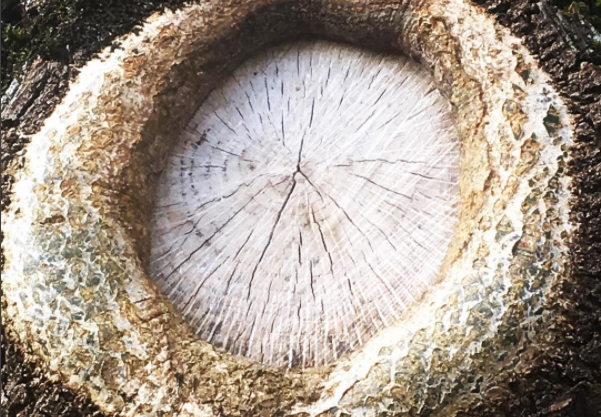Haiku of the Week Features: Tree Knot