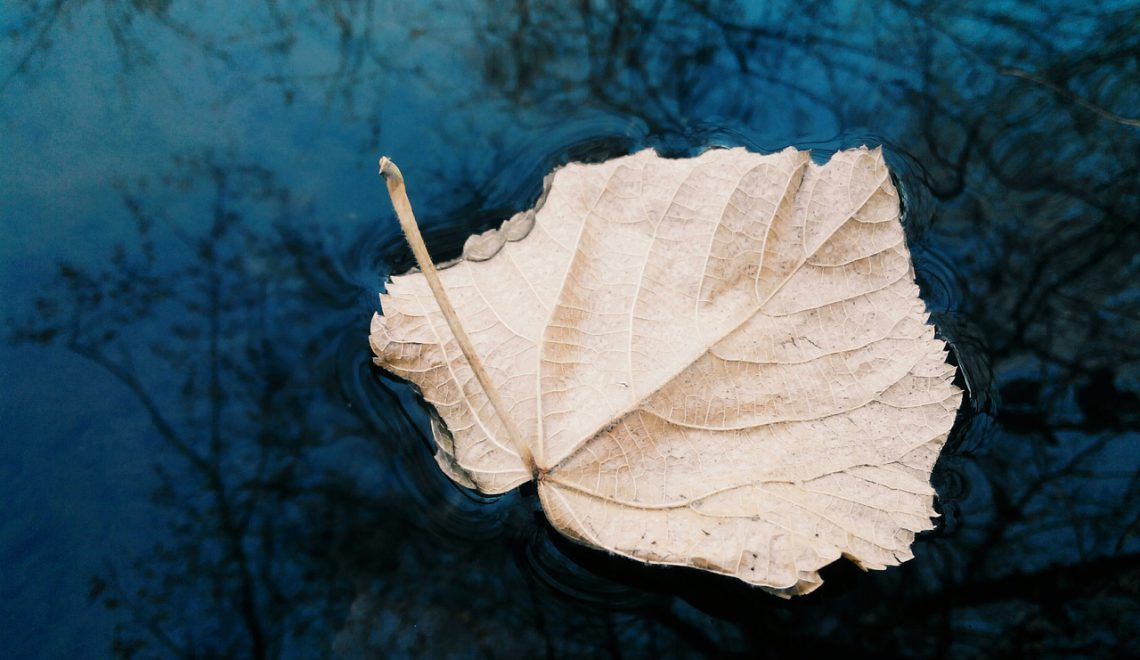 Sunday Inspirational Poetry, Love Poetry: Leaves